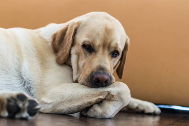A boring dog