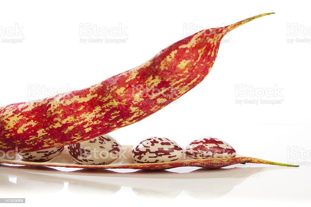 Borltti beans in the pod stock photo