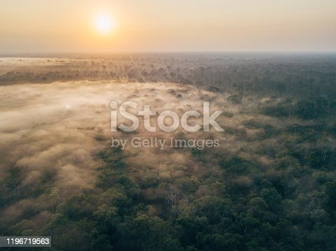 Borneo wildlife and jungle in the Tanjung Puting national park. The national park is located in the Southern West part in the indonesian part of Borneo. This part was unfortunately also damaged in a fire in 2019.