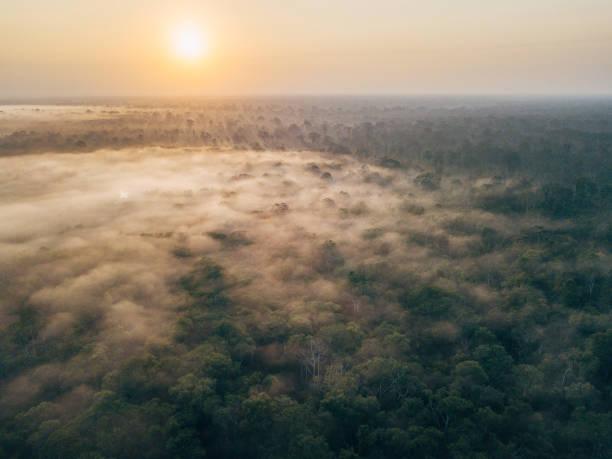 Borneo wildlife and jungle stock photo