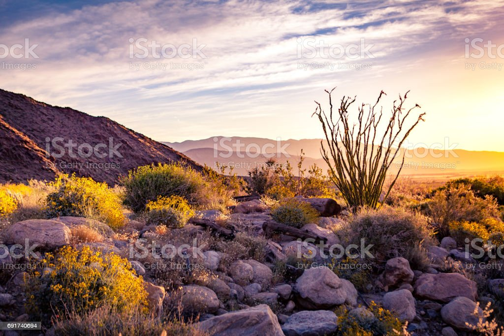 Borrego Palm Canyon Alluvial Fan At Sunrise With Ocotillo Silhouette stock photo