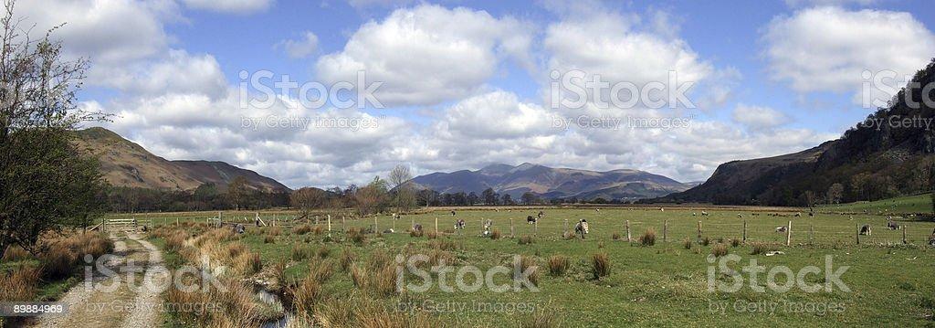 Borrowdale Sheep royalty-free stock photo