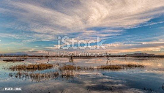 Golden grasses in flood plain at Bosque Del Apache