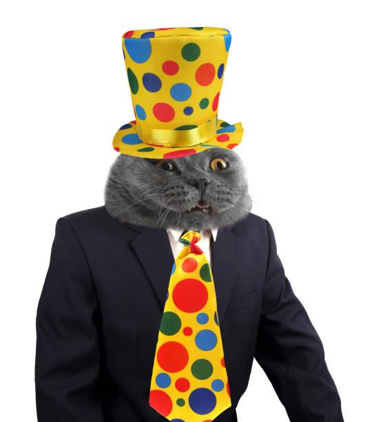 Boss cat on the party picture id920882798?b=1&k=6&m=920882798&s=612x612&w=0&h=y1hc62gea1ane5nmud0f9hoorgiwqlpwpjilli50d4w=