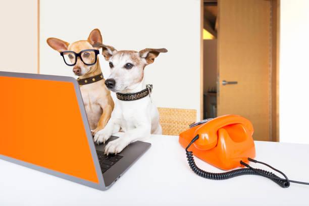 Chef Management Hunde im Amt – Foto