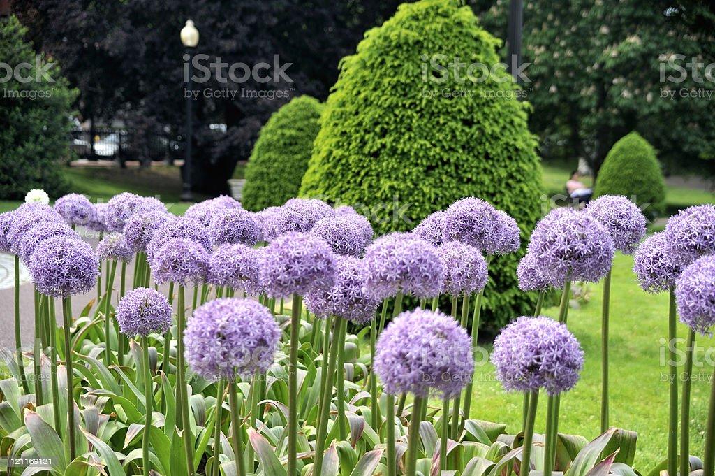 Boston Pubic Garden royalty-free stock photo
