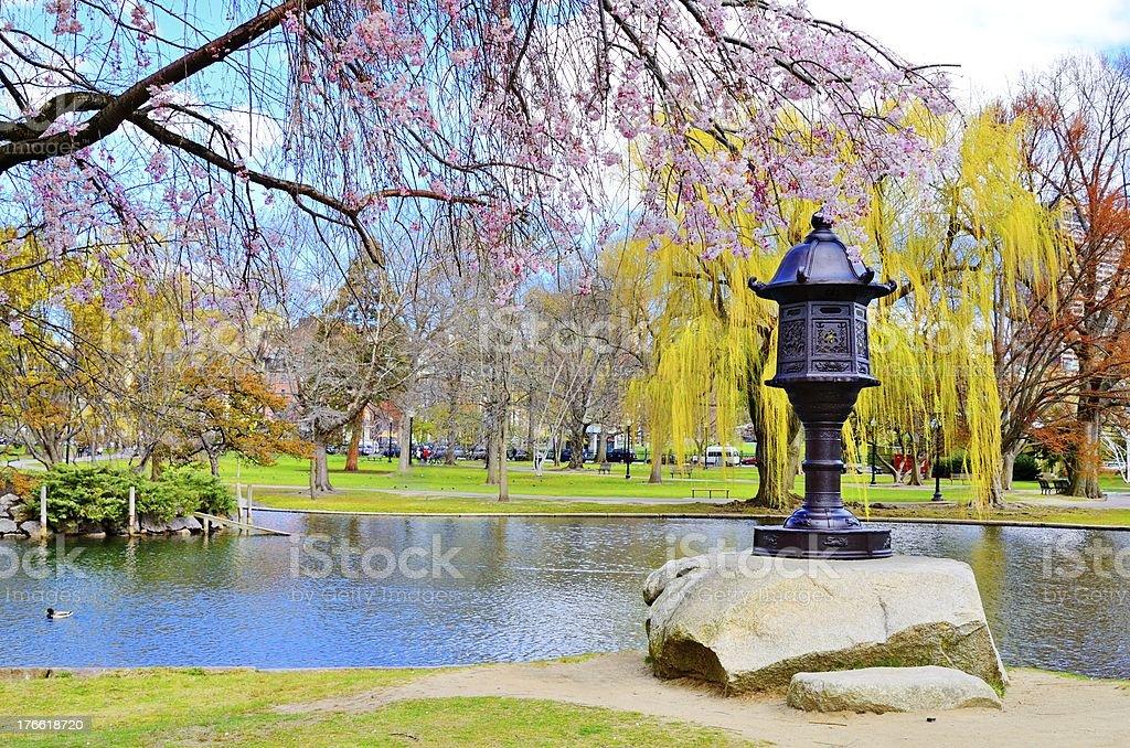 Boston public garden next to pond stock photo