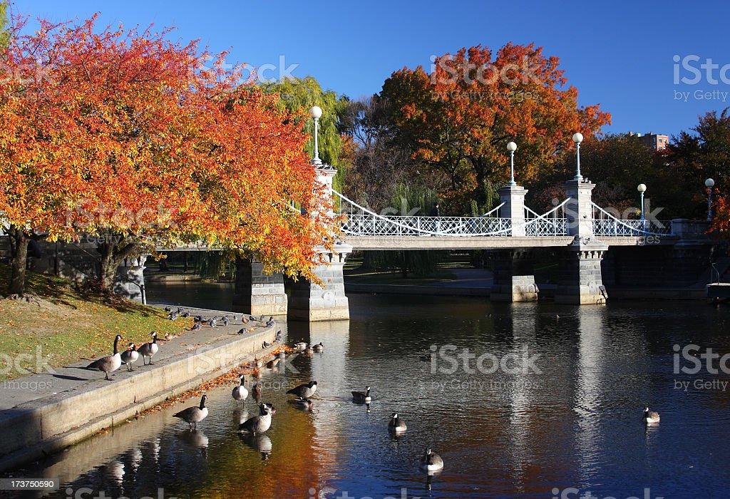 Boston Public Garden royalty-free stock photo