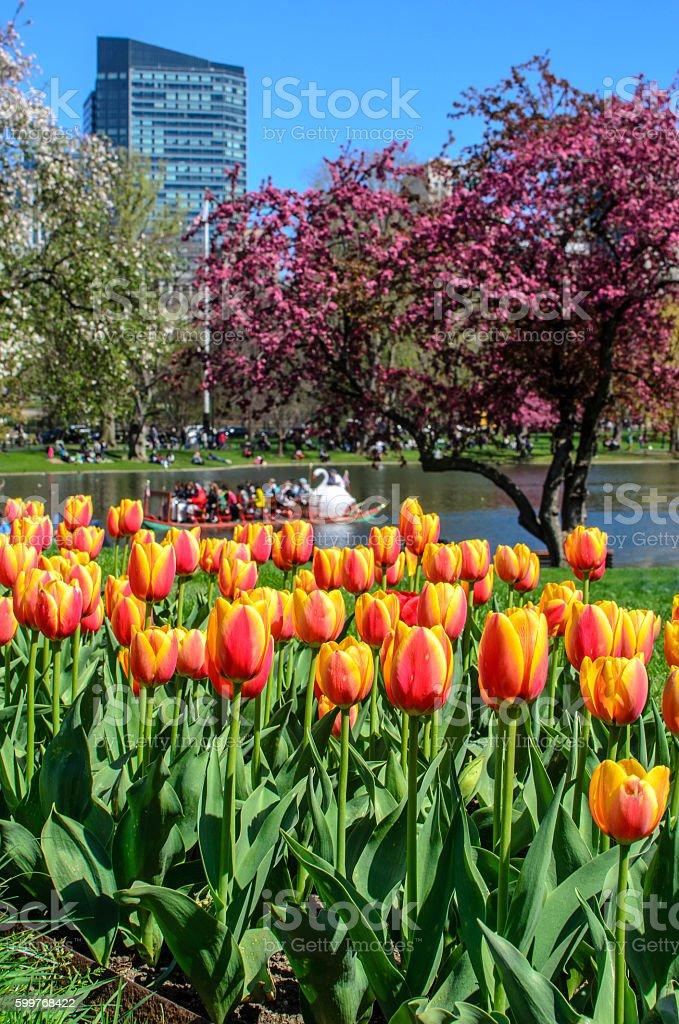 Boston Public Gardens stock photo
