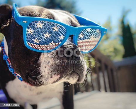 509363072 istock photo Boston Terrier Puppy Dog Wearing American Flag Glasses 995092304