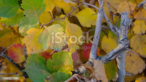 istock Botanic garden Autumn nature plant leaf background image 1090821990