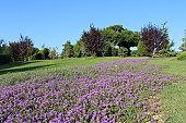 botanic garden in istanbul