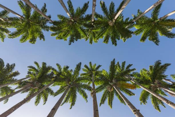 Jardin botanique de Rio de Janeiro au Brésil avec allée arbre palmier - Photo