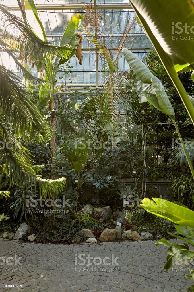 botanic garden indoors, in green house. tropic vegetation, various plants. Belgrade Serbia. stock photo