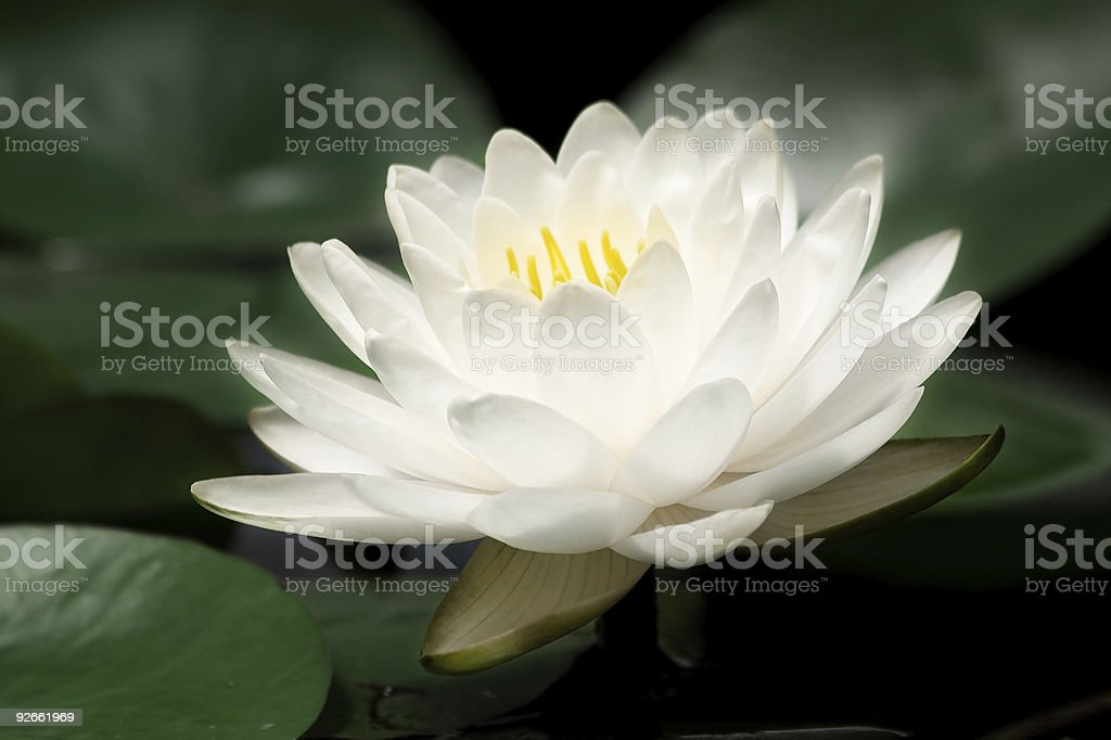 Botanic garden. royalty-free stock photo