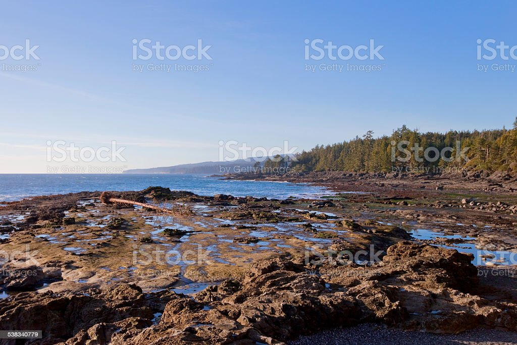 Botanical Beach Low Tide stock photo