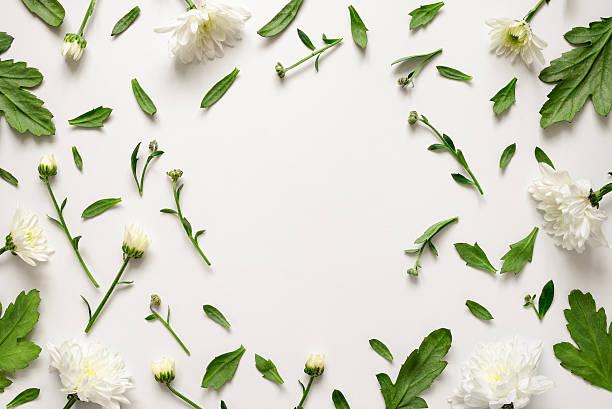 botanical floral background - botanique photos et images de collection