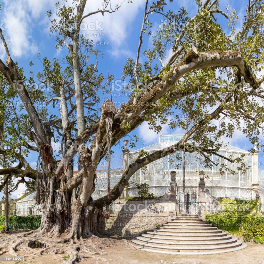 Botanical Garden Coimbra - stock photography - foto stock