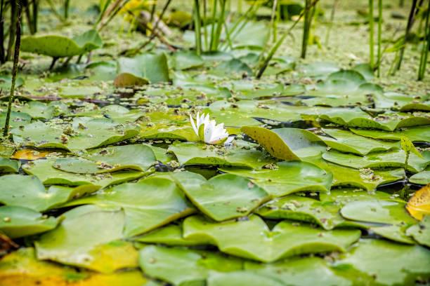 식물원, 에를랑겐, 프랑코니아, 독일 스톡 사진