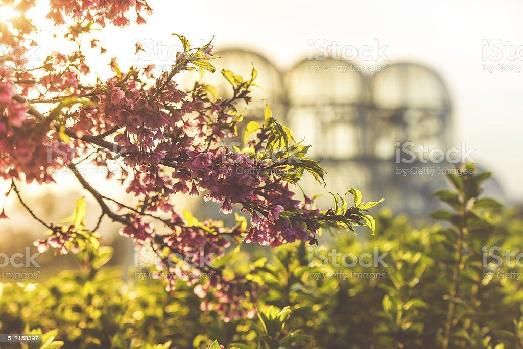 Botanical Garden in Curitiba stock photo