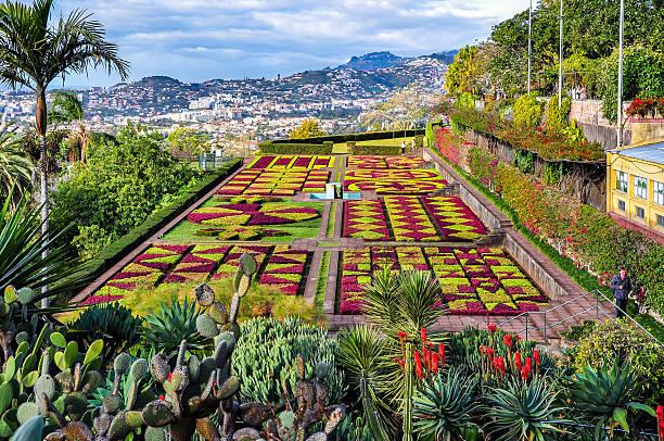 jardim botânico no funchal, madeira, portugal - funchal madeira imagens e fotografias de stock