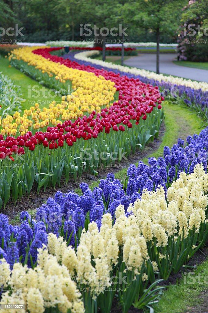 Botanical garden in spring time royalty-free stock photo