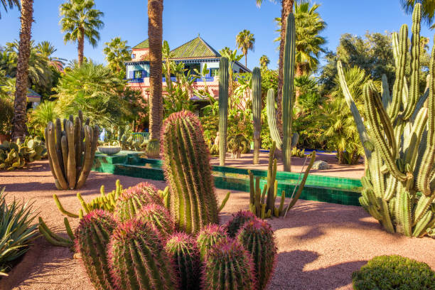 Botanical garden Jardin Majorelle in Marrakesh stock photo