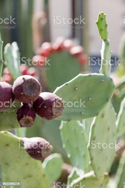 Ogród Botaniczny W Katanii Sycylia - zdjęcia stockowe i więcej obrazów Bez ludzi