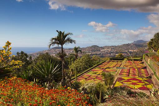 Jardim Botânico Do Funchal - Fotografias de stock e mais imagens de Ao Ar Livre