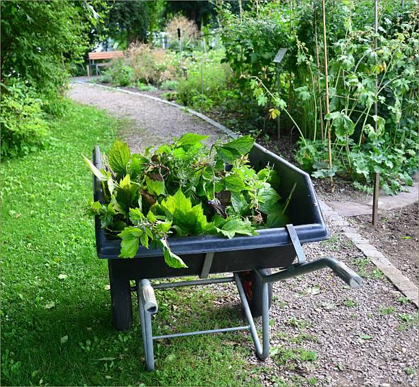Botanical garden of the Basel University stock photo