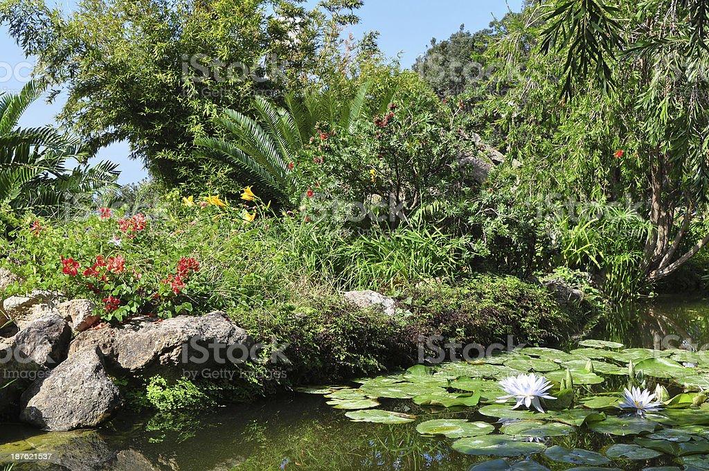 botanical garden on Ischia island stock photo