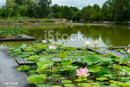 The free to enter Botanical Gardens Bordeaux, France.  There are tourist walking around pond with water lilies in the foreground.