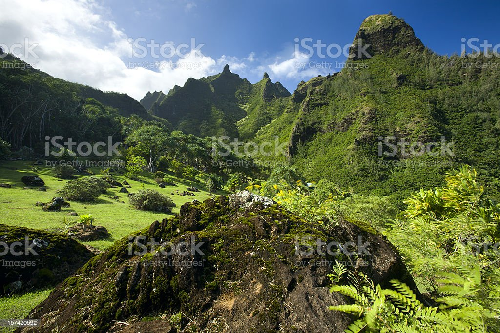 Botanical gardens in Hawaii. stock photo