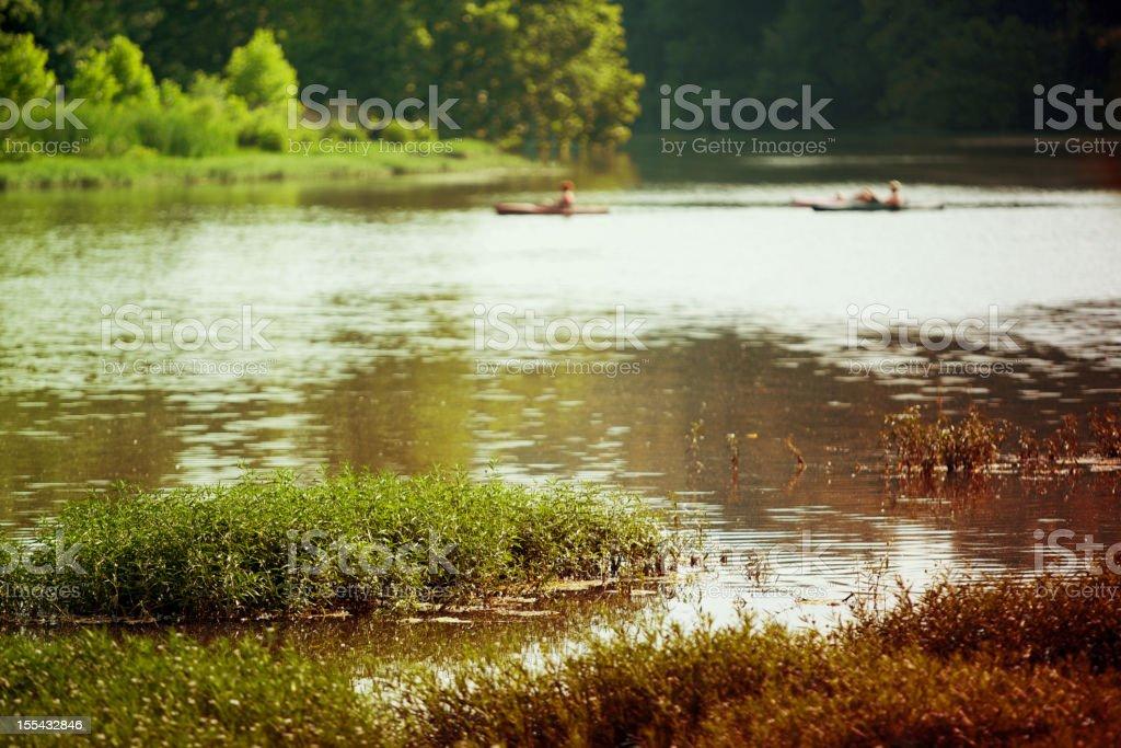 botanical marsh wetland lilly foliage background royalty-free stock photo