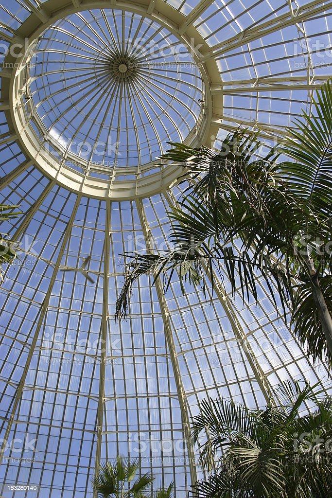 Botanical setting royalty-free stock photo