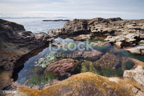 Tidal pool rich with sea life on botanical beach on the west coast of Vancouver Island.