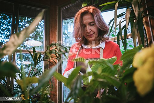 A middle aged woman in a leather  apron spritzing plants with a mister. She is standing in a beautiful greenhouse, behind a desk filled with plants and flowers