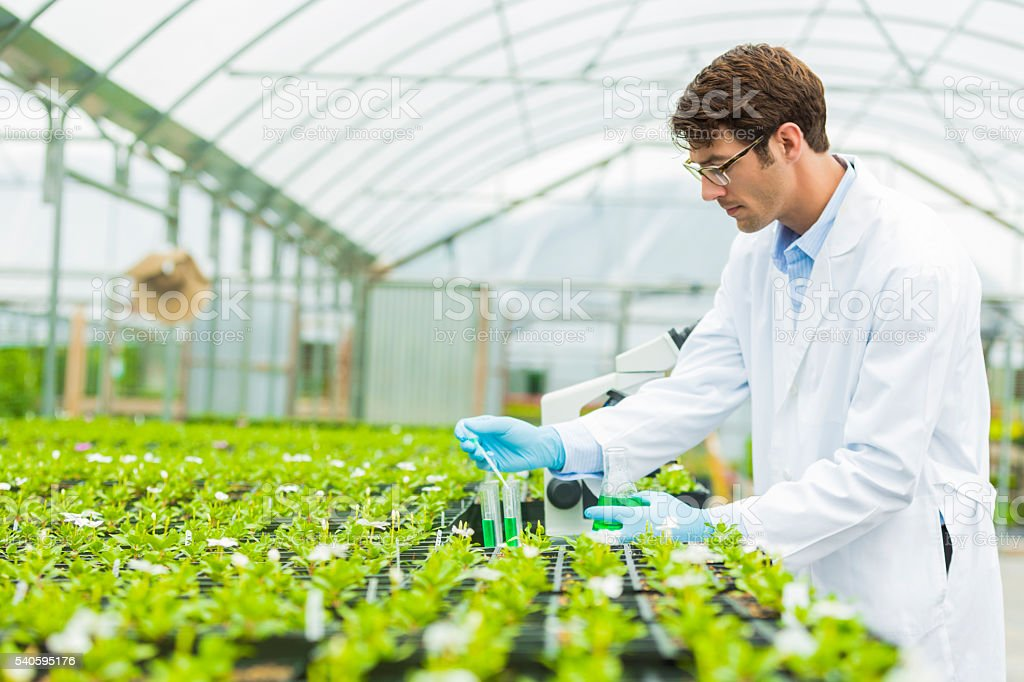 Botanist working in test lab stock photo