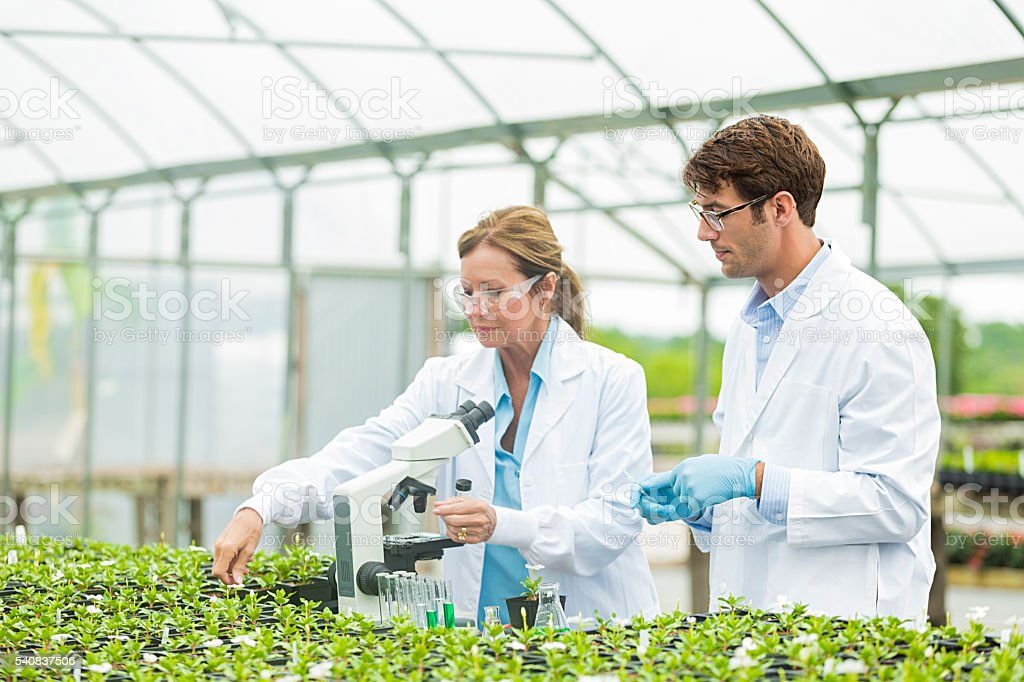 Botanists studying plant life stock photo