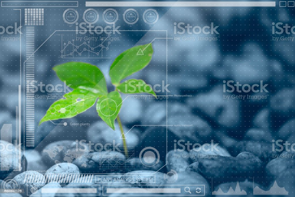 Botany information technologies or Plant Biology analysis  . chart info mixed media stock photo