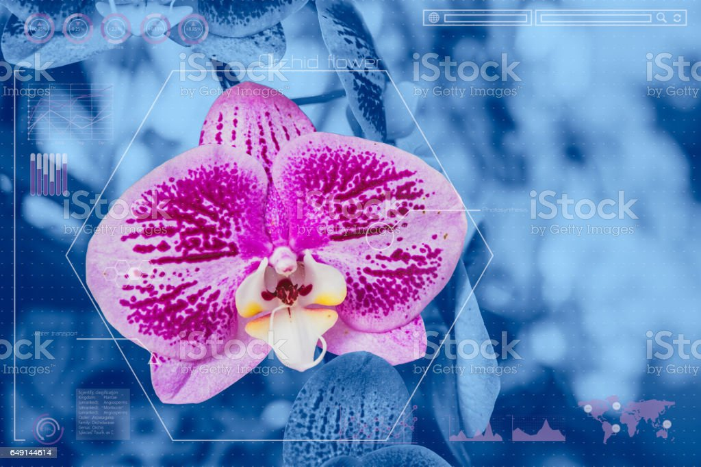 Botany Information Technologies Or Plant Biology Analysis Orchid