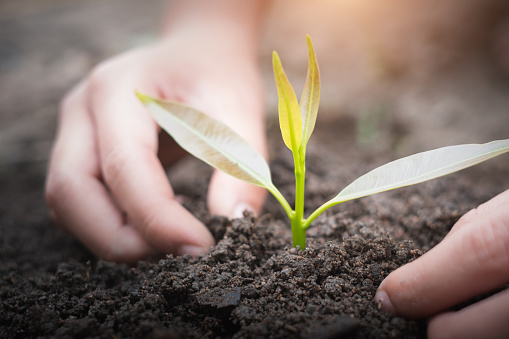 912882270 istock photo Both hands are planting and caring for the seedlings to be strong trees. The concept of World Environment Day, take care of seedlings to grow, save the world, plant trees to reduce global warming. 1257679830