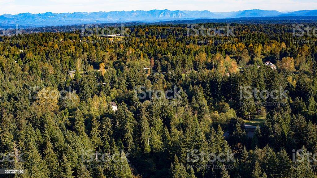 Bothell Mill Creek, Washington Suburban Forest Aerial stock photo