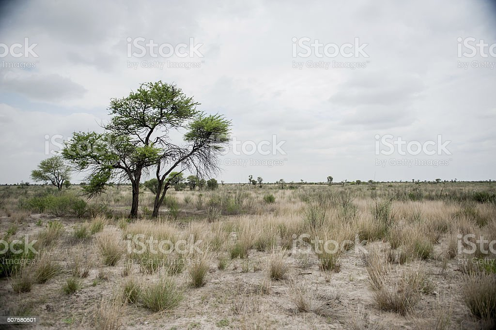 Botswana Landscapes stock photo