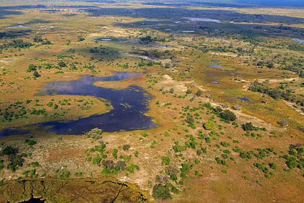 botswana - półpustynny zdjęcia i obrazy z banku zdjęć