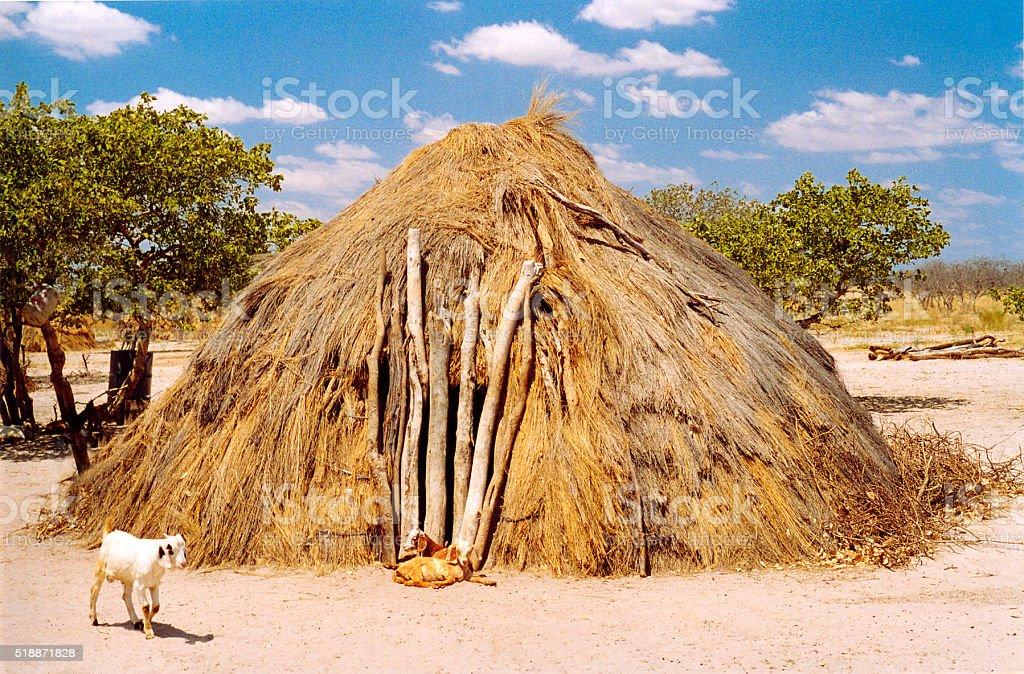 Botswana: San Bushmen Grass Hut Village, Goats, Blue Sky stock photo