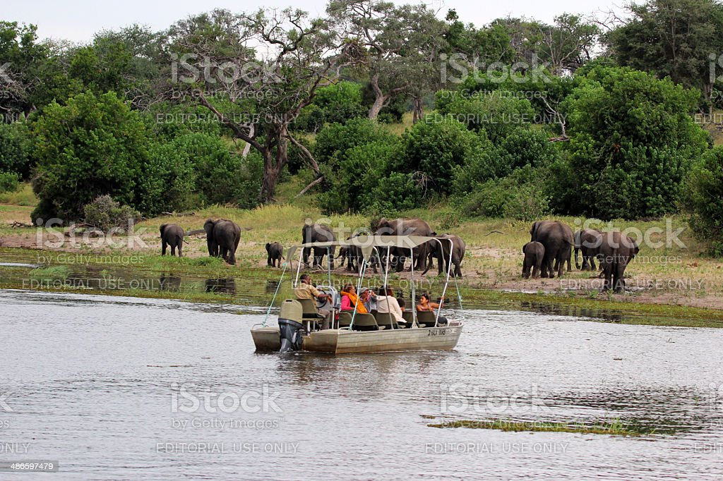 Botswana: Tourists view Elephants from Boat in Chobe National Park stock photo
