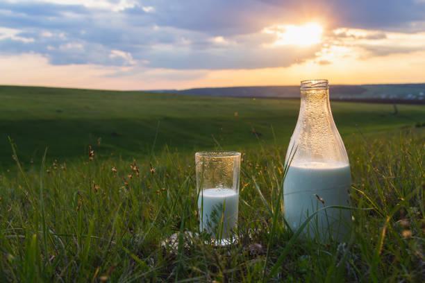 botella y vaso con leche en la hierba contra un telón de fondo de prados verdes pintorescos con flores al atardecer día de verano. comida orgánica fresca. energía natural. - producto lácteo fotografías e imágenes de stock