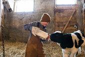 Young boy bottling feeding a calf in a barn.