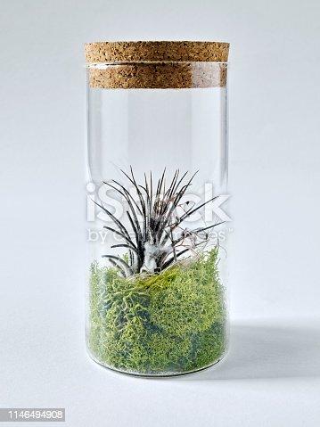 Sealed vase with plants inside